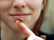 gallery/10-bee-on-finger